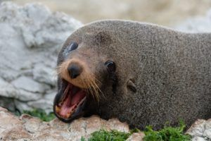 14 Best Places to See Seals in New Zealand