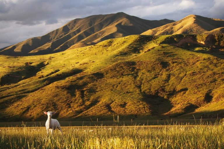 5 Places to Visit in Spring in New Zealand
