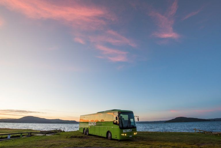 Bus Networks in New Zealand