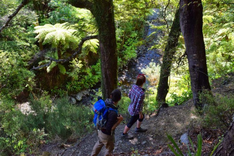 Hutt Valley - Guide for Backpackers