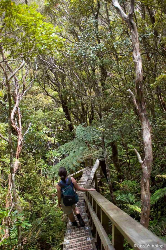 12 Must-Do Hikes on Great Barrier Island