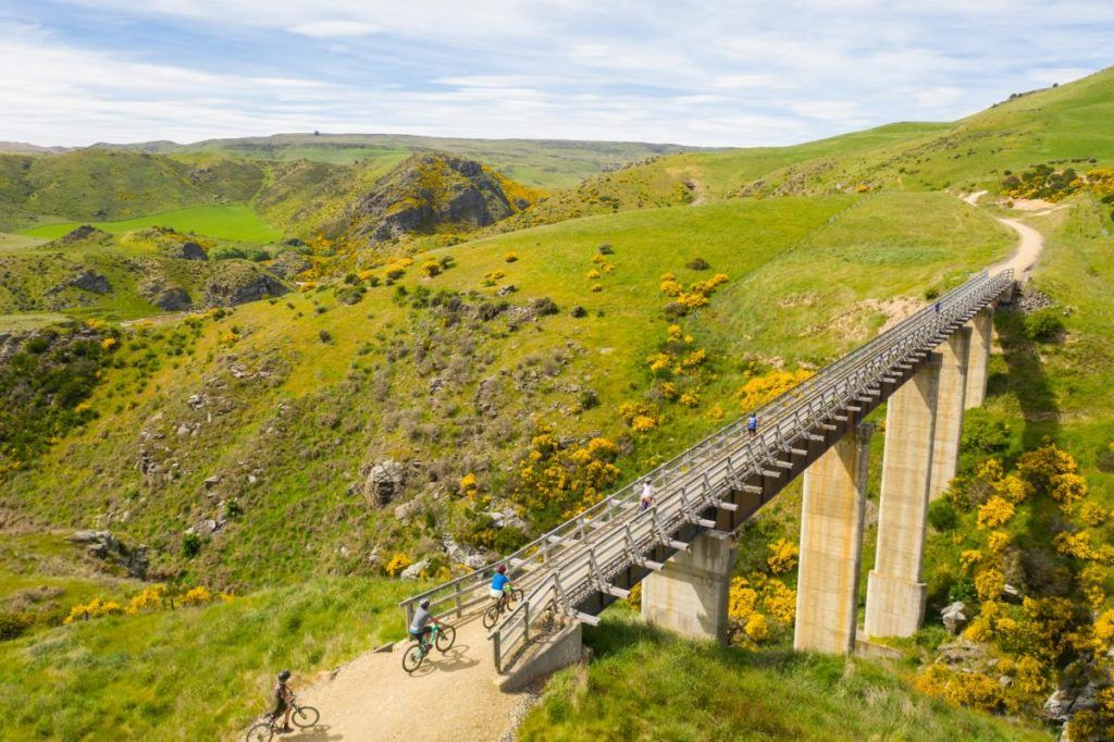 Mountain Biking in Dunedin