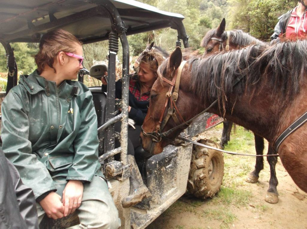 10 Reasons Why WWOOFing is a New Zealand Must Do