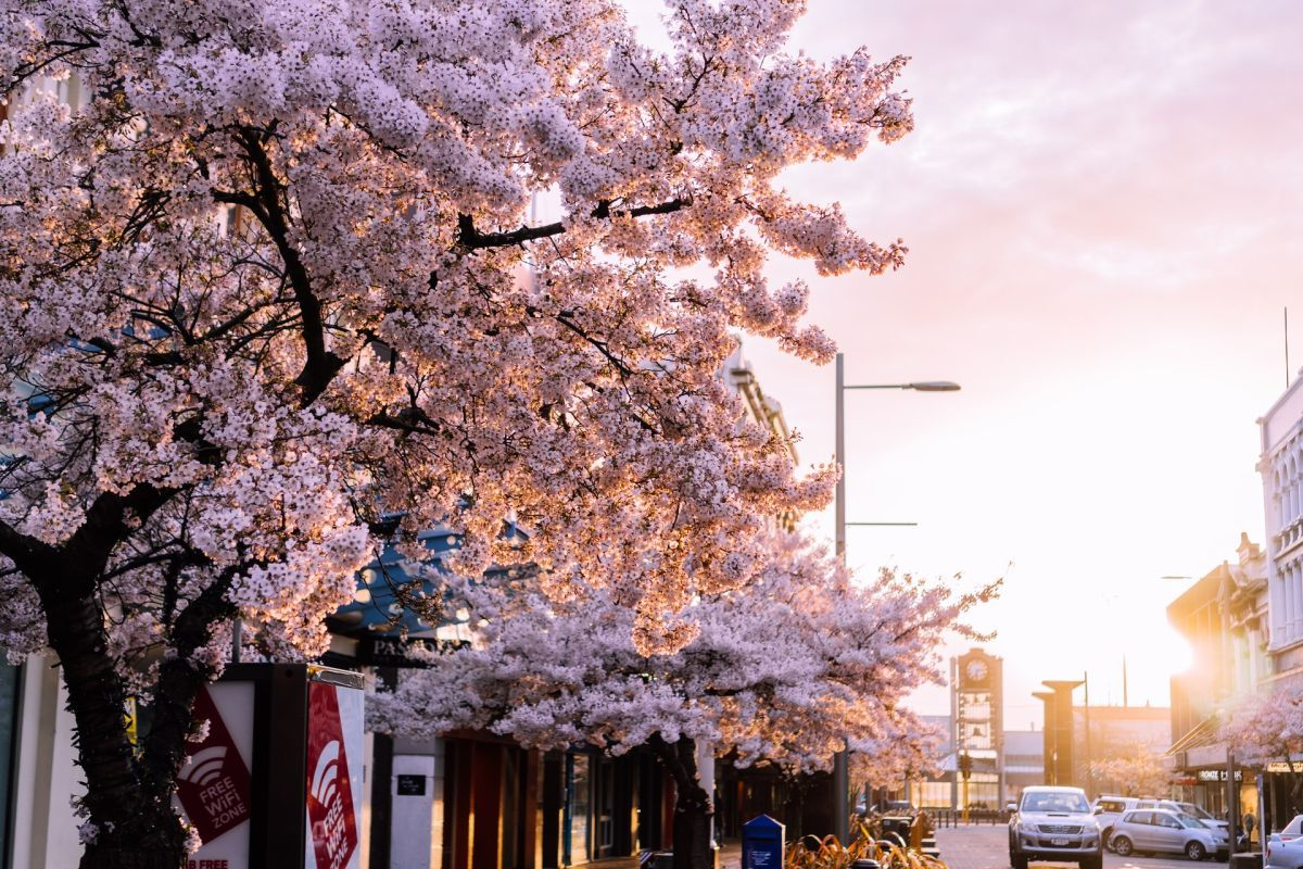 The Budget Accommodation Guide to Invercargill