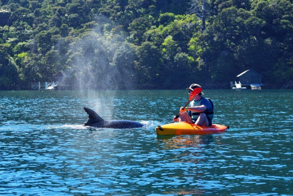 10 Awesome Activities in the Marlborough Sounds
