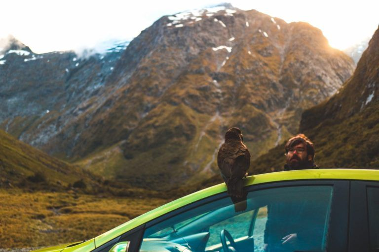 Should You Rent or Buy a Vehicle to Travel New Zealand?