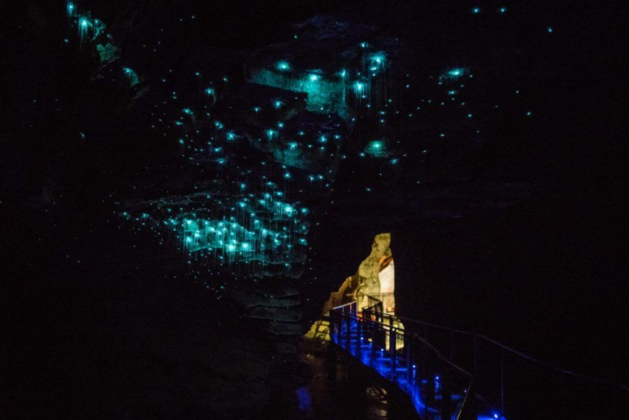 Where to See Glow Worms in New Zealand