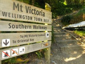 10 Best Walks in Wellington
