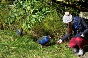 6 Spots to Experience Wellington Wildlife