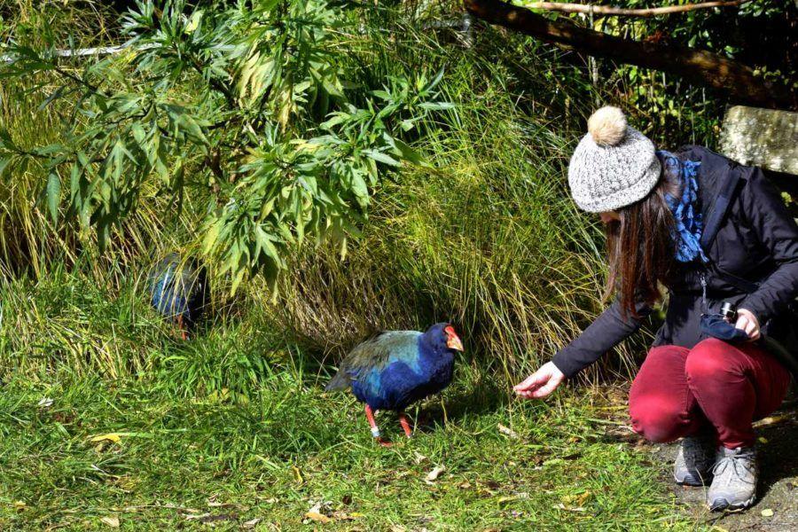 6 Spots to Experience Wellington Wildlife