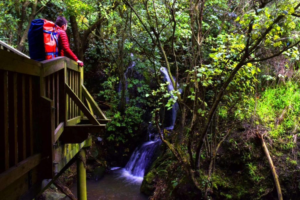6 Amazing Things to Do in Ashhurst