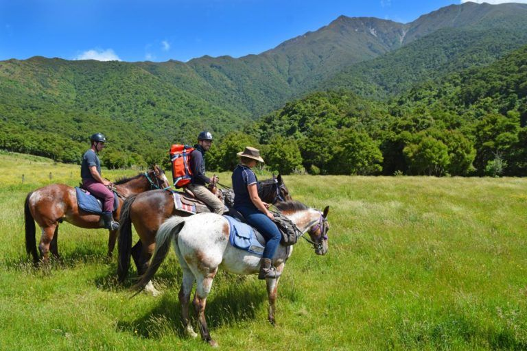 Horse Riding in the South Island - Day 205