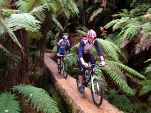 6 Must-Do Bike Trails in Whakatane