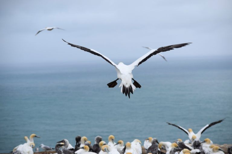Cape Kidnappers Gannets & Tractor Tour - Day 263