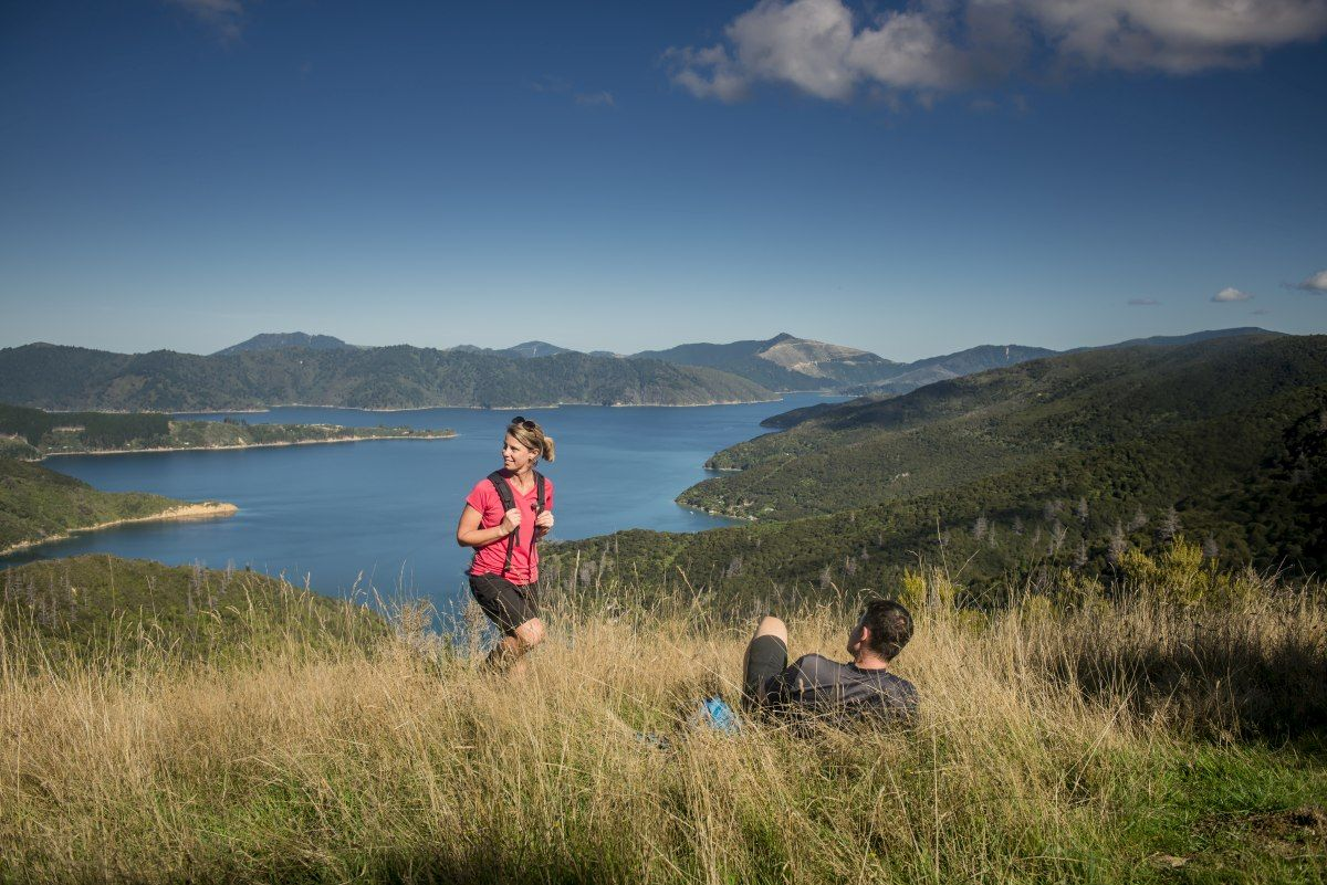 The Ultimate Guide to the Queen Charlotte Track