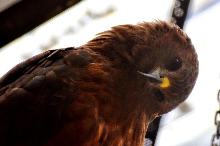 Wingspan: Amazing Wildlife Activity in Rotorua - Day 290, Part 1