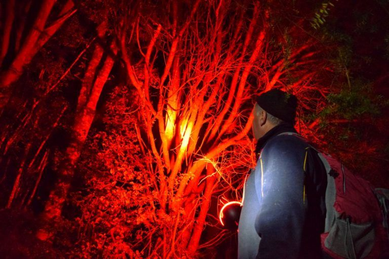 Kiwi Spotting in the Trounson Kauri Park - Day 363