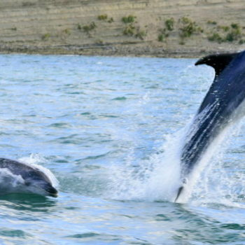 Dolphin Safaris Help to Forget About Campervan Problems