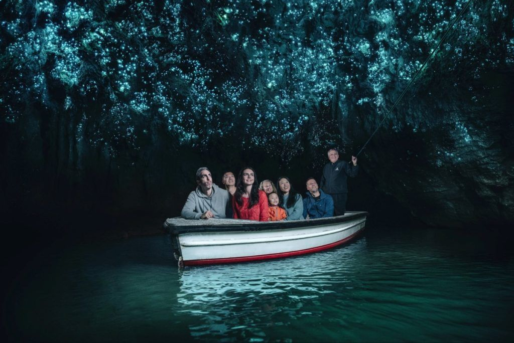 10 Fun Facts About New Zealand Glowworms