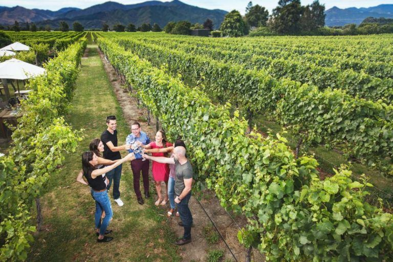 10 Best Wineries in Blenheim
