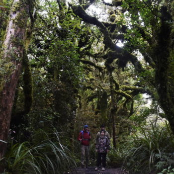 6 Hikes You Have to Do in Egmont National Park