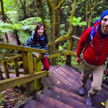 9 Must-Do Walks in Porirua