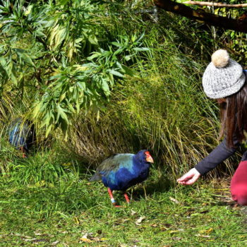 Zealandia: Welcome to Wellington's Wild Side