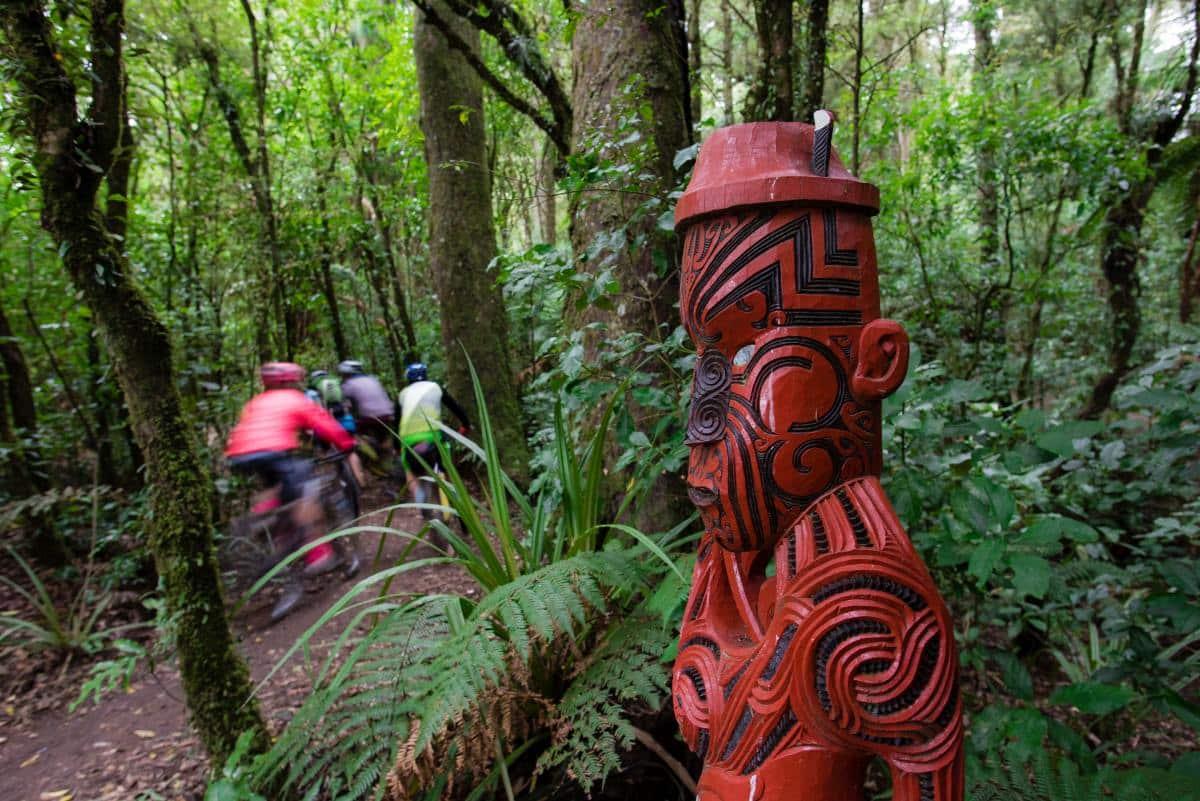 Mountain Biking in Waikato