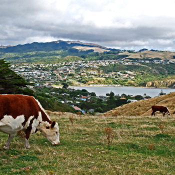 10 Fun Things to Do in Porirua