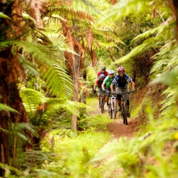 10 Must-Do Bike Trails in Rotorua