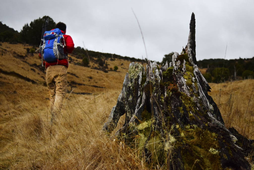 backpackerguide.nz
