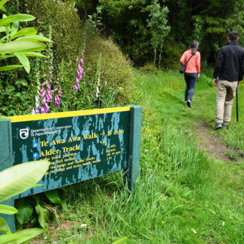 Exploring the Awa Awa Rata Reserve in Methven