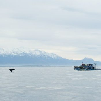 10 Incredible Things to Do in Kaikoura