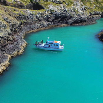 12 Stunning Backpacker Cruises in New Zealand