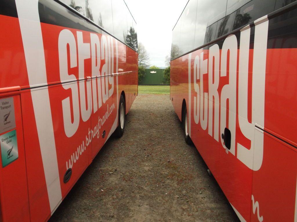 stray bus new zealand