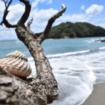 5 Best Beaches for Snorkelling in Auckland