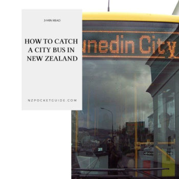How to Catch a City Bus in New Zealand