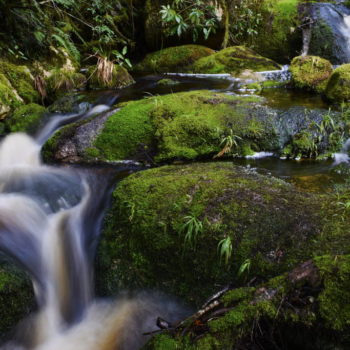Kahurangi National Park  Guide for Backpackers