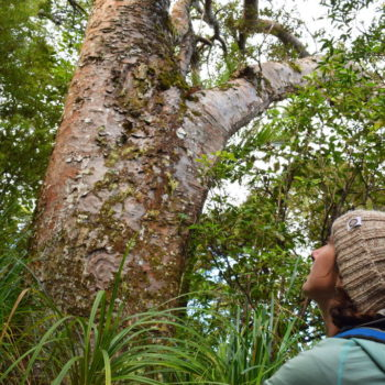 8 Breathtaking Kauri Forests in Northland