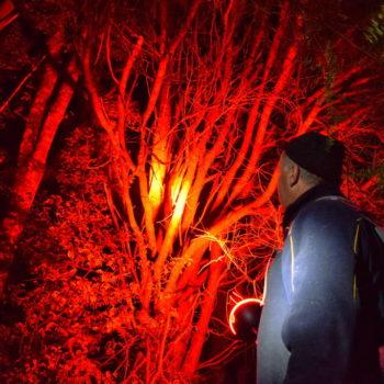 Kiwi Spotting in the Trounson Kauri Park