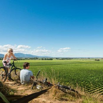 10 Amazing Things to Do in Blenheim
