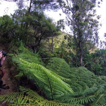 The Best Time to Visit the North Island