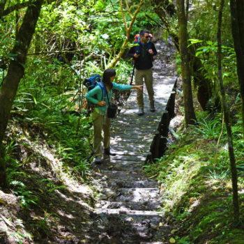 Muddy Hikes and Bird Heaven in Orari Gorge