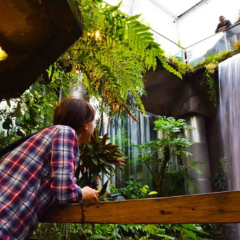 11 Things to Do in Dunedin on a Rainy Day