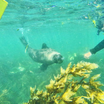 Swimming with Seals in Kaikoura