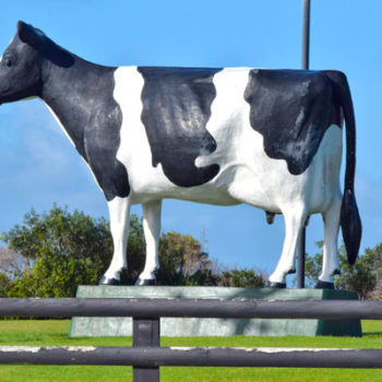 10 Excellent Things to Do in Hawera