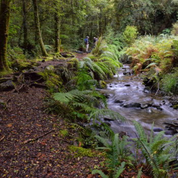 12 Turangi Walks You Can't Miss