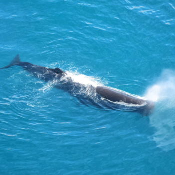 5 Places to Spot Whales in New Zealand