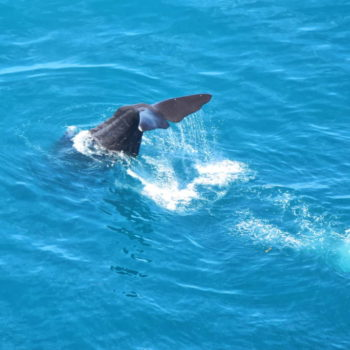 Whale Watching from the Skies in Kaikoura
