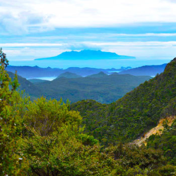 Guide to the Aotea Track on Great Barrier Island